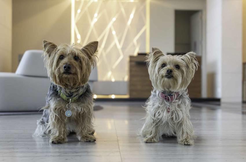 Servicio de lujo para tu mascota en hotel cinco estrellas