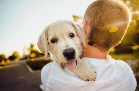 5 tips para ser un dueño responsable de mascotas